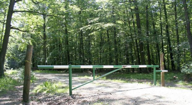 Nowe wzory formularzy dla płatników podatku leśnego