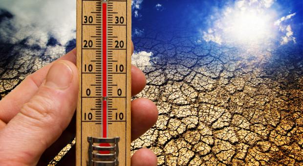 IMGW: w woj. lubuskim padł rekord temperatury czerwca w Polsce - 38,2 st.