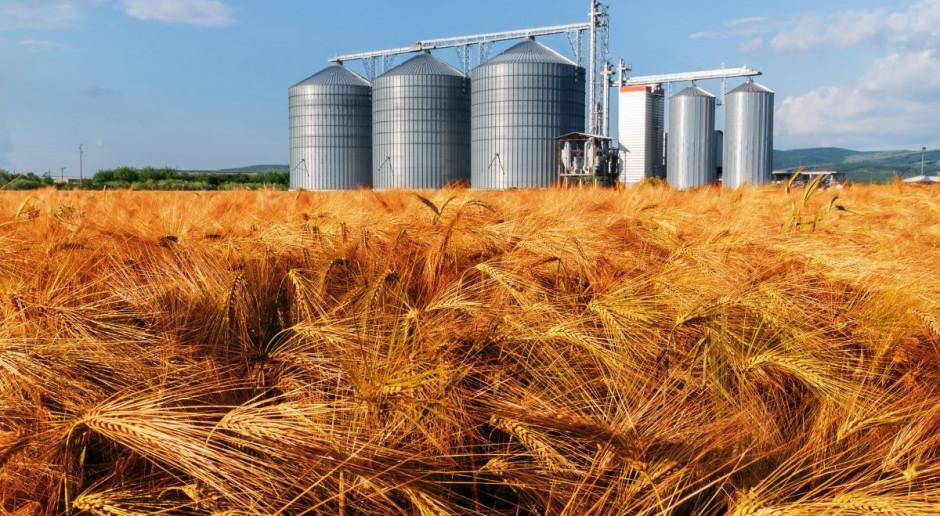 Jęczmień z nowych zbiorów po średnio 560 zł/t – firmy badają rynek
