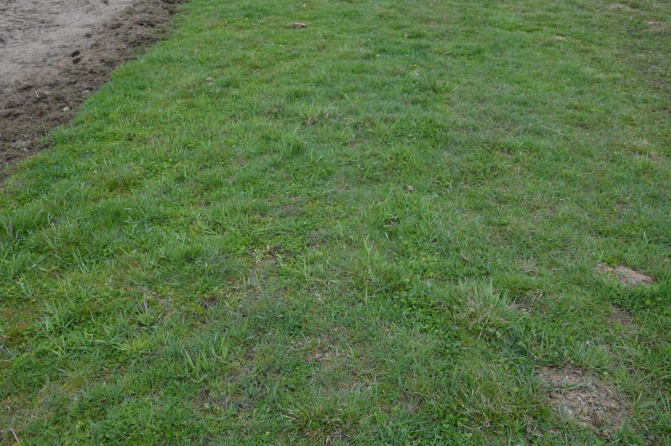 Tuż po zakupie większą część powierzchni łąk pokrywał sit.