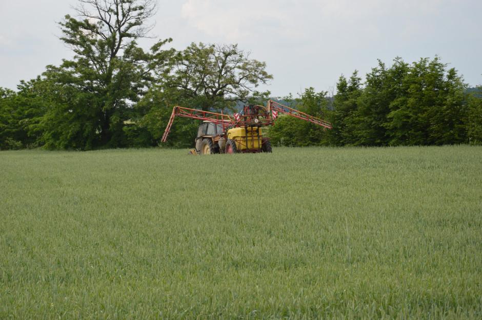 Ochrona chemiczna ogranicza zagrożenie mikotoksynami. W czasie przekropnej pogody zabieg fungicydowy w terminie T-3 dobrze jest przeprowadzić krótko przed opadami deszczu lub bezpośrednio po nich. Najlepiej wówczas zabezpieczy plantację przed czernią zbóż