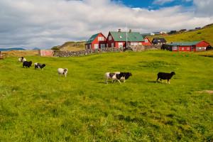 Nowy duński rząd chce zaostrzyć dla rolników przepisy dotyczące ochrony środowiska