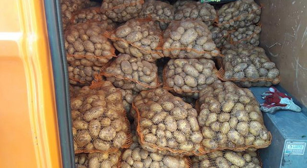 Kontrola przemieszczania bulw ziemniaków w Łodzi
