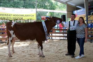 Czempion w kategorii krowy PHF w I laktacji - pierwiastki RW