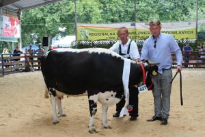 Czempion w kategorii krowy mlecznych ras zachowawczych