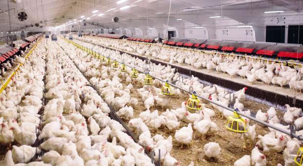 RPO sprawdza zezwolenia dotyczące budowy ferm w Kruszynianach