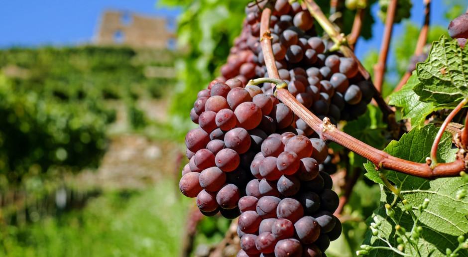 KOWR: Informacja dla producentów i przedsiębiorców wyrabiających wino
