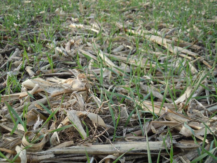 Uproszczenia w uprawie roli pozwalają ograniczyć m.in. emisję gazów cieplarnianych do środowiska.