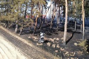 Pod Gostyniem palił się też las, ale pożar szybko udało sie strażakom opanować, Foto: OSP Śmigiel