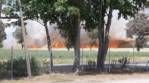 Pożar pól w Kostomłotach (powiat bialski), fot. zdjęcie i film przysłane przez czytelnika
