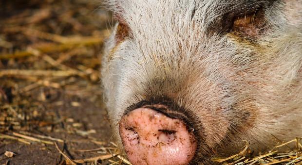 W 2018 r. utylizacja padłych zwierząt za 140 mln zł