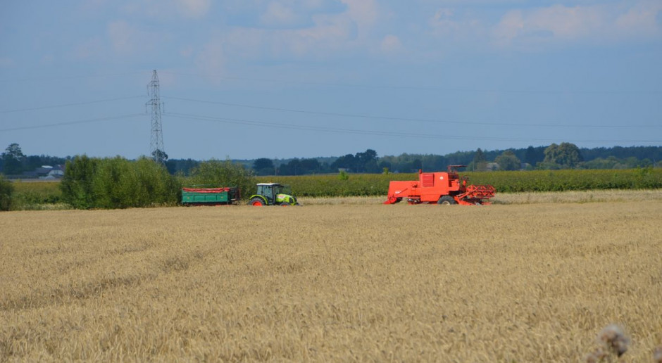 Ceny zbóż się obniżyły – koszony jest jęczmień, rzepak, ale też pszenżyto i pszenica