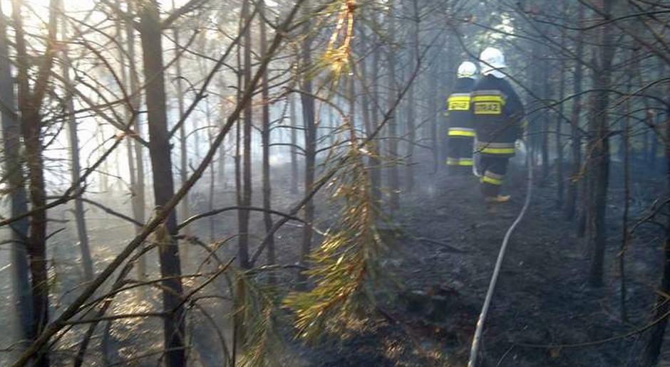 Duży pożar lasu pod Kozienicami
