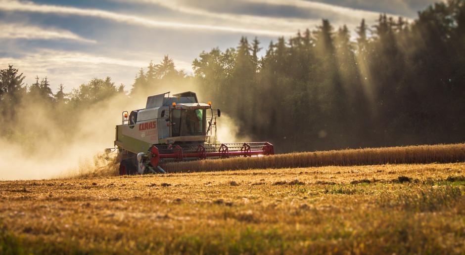 DBV o zbiorach zbóż i rzepaku w Niemczech