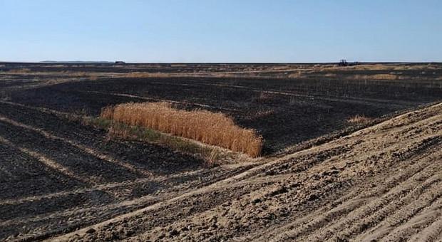 Dwieście hektarów pól płonęło w woj. lubuskim – prawie połowa to zboże na pniu