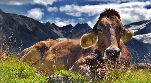 Austria: Więcej pieniędzy za dobrostan zwierząt