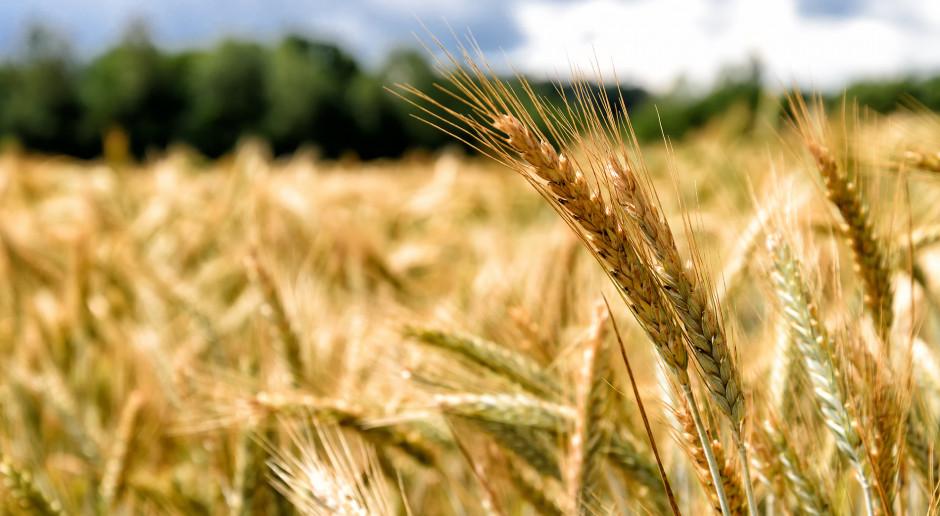 Zniżka cen zbóż na światowych giełdach