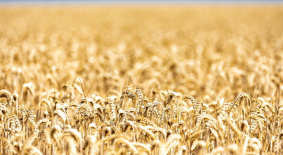 Wzrost cen zbóż na paryskiej giełdzie MATIF