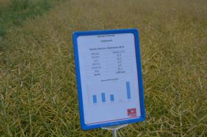 Do końca maja spadło 199 mm w czerwcu również padało