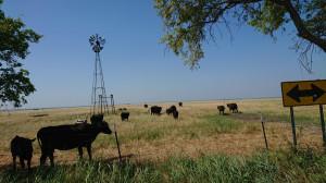 W przypadku gospodarstwa Travisa, potrzebuje on średnio ponad 3 ha pastwisk, do zapewnienia bazy paszowej dla jednej krowy, fot. T. Kuchta