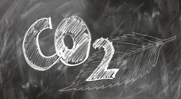 Chiny i Niemcy pracują nad ograniczeniem emisji gazów cieplarnianych z hodowli zwierząt