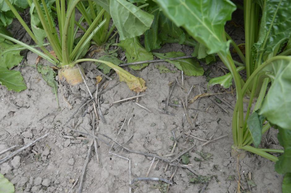 Zaprzestanie uprawy orkowej poprawia jakość gleby