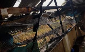 Na fermie pod Cieszkowem spłonęły klatki z norkami, Foto: OSP Cieszków