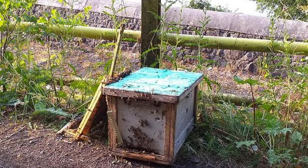 Złodziej zgubił skradzione ule, pszczoły atakowały ludzi