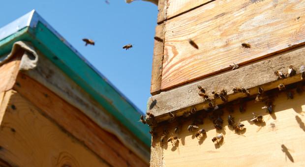 Małopolskie: po wytruciu pszczół ludzie chcą pomóc w odbudowie pasieki