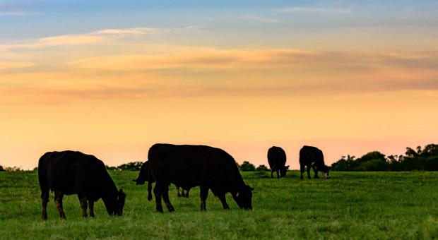 Ardanowski: trzeba szukać rozwiązań dobrych dla hodowców bydła i przetwórców
