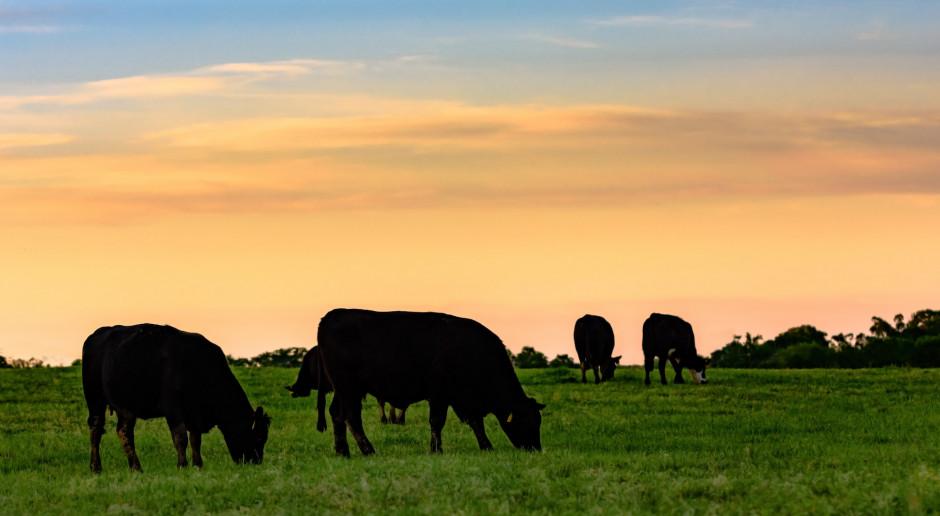 ARiMR: więcej czasu na wnioski o dopłaty za podwyższony dobrostan świń i krów