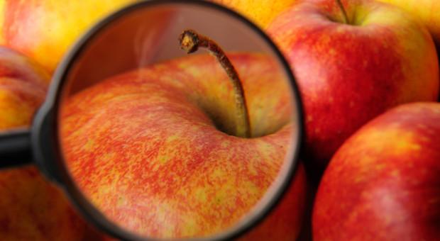 Rosja sprawdza białoruskie jabłka
