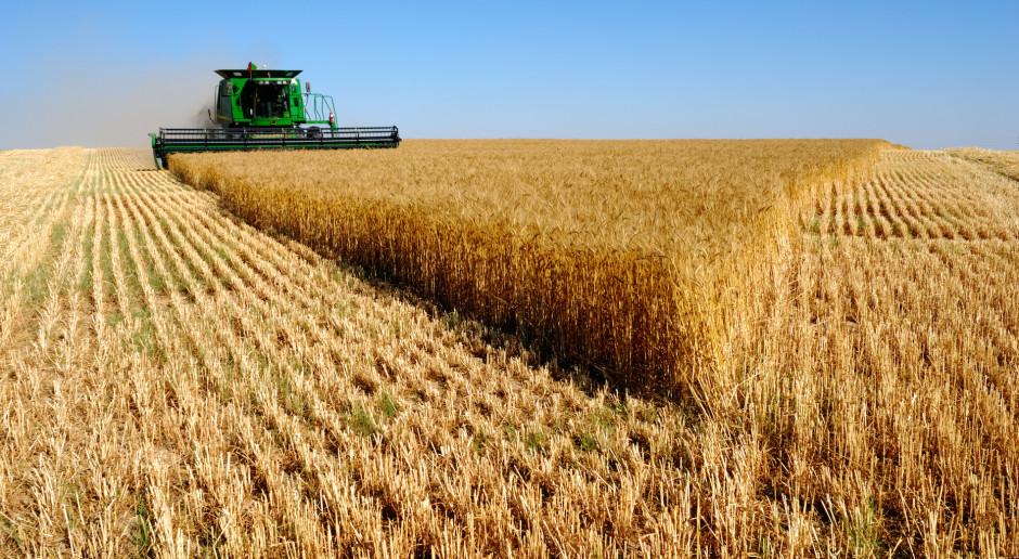 W Rosji zbiory zbóż zbliżają się do 136 mln ton