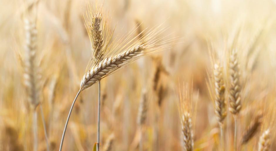 Na światowych giełdach większość zbóż podrożała