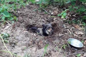 Pies zakopany żywcem w lesie – właściciel zatrzymany