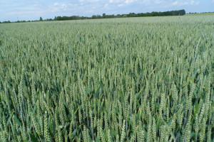 Rola uprawy w ochronie gleby w opinii praktyków