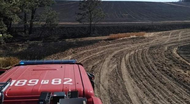 Ogromny pożar zboża w Wielkopolsce. Spłonęło 100 ha!