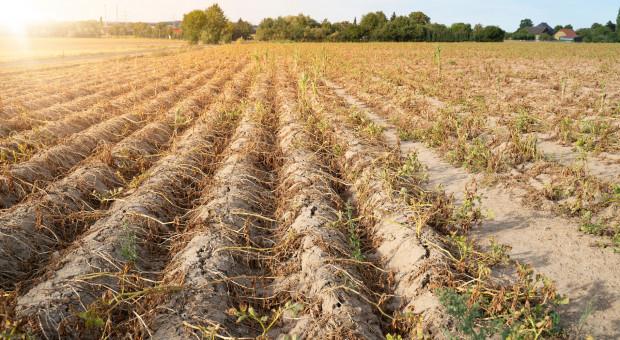 Giżyński: rządowa pomoc dla dotkniętych suszą po podliczeniu 50 proc. strat