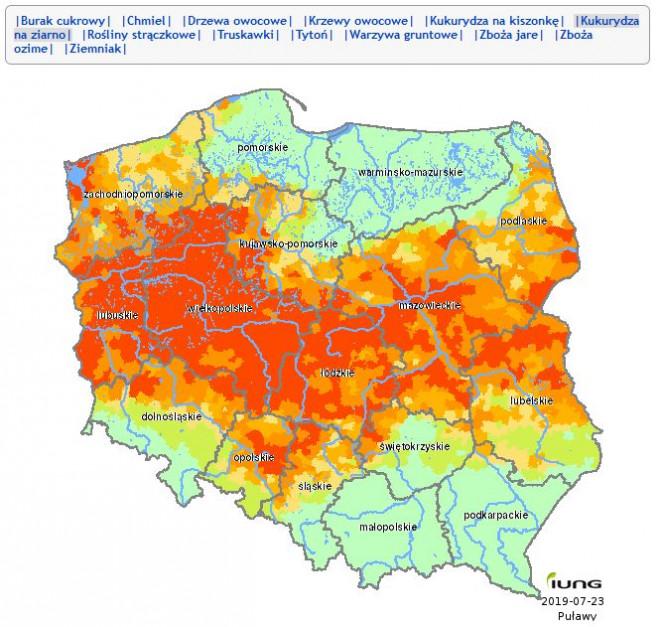 Potencjalny zasięg suszy w uprawie kukurydzy na ziarno, źródło: IUNG PIB