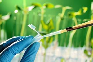 Zegar biologiczny roślin pomaga ustalić najlepszy czas oprysków