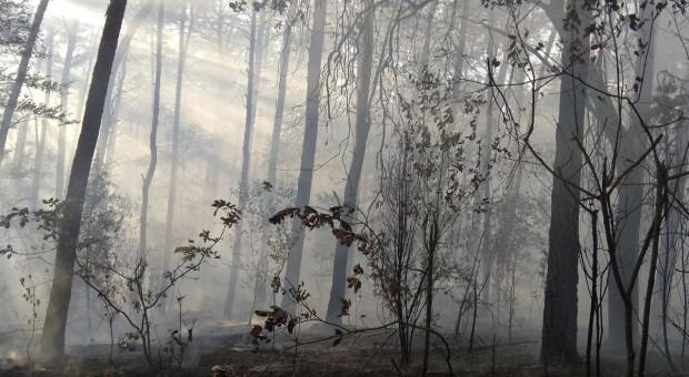 Spłonęło 5 hektarów lasu w Puszczy Kampinoskiej