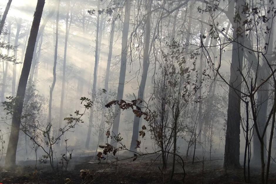 W Kampinoskim Parku Narodowym spłonęło 5 ha lasu, Foto: OSP Młodzieszyn