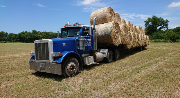 Farmer w Teksasie, cz. 18: Dopłaty i ubezpieczenia w Teksasie