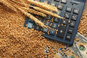 GUS: Ceny zboża znacznie wyższe niż przed rokiem