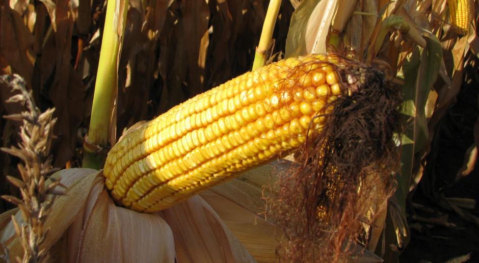 Kolejna fuzja na rynku rolnym?