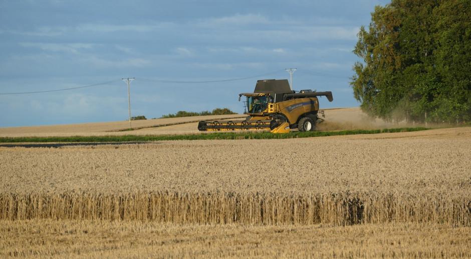 Na Ukrainie zebrano 28 mln ton ziarna zbóż i nasion bobowatych