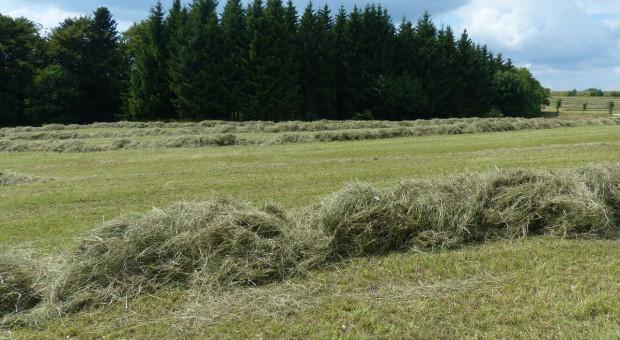 Białoruś: Zbiory zbóż zaawansowane w 40 proc.