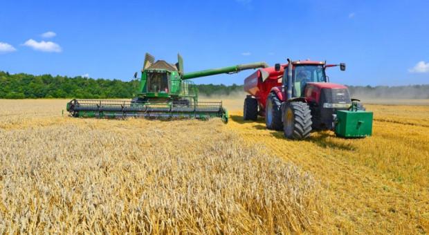 Ceny zbóż takie jak przed tygodniem
