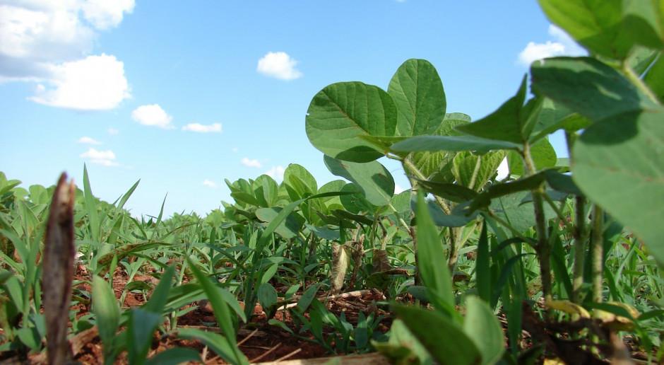 UE: Obszar uprawy soi największy od 25 lat