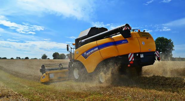 Ukraina oczekuje większych zbiorów pszenicy niż w ubiegłym roku